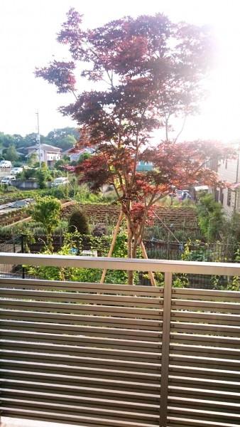 サービス付き高齢者向け住宅、清住の杜町田の朝