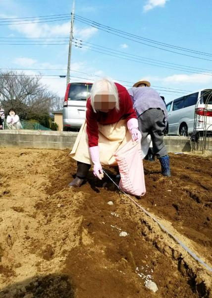 ぬくもりの畑にジャガイモを植えました