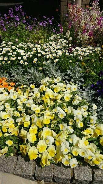 ぬくもりの花壇には春の花がぬくもりの花壇には春の花がぬくもりの花壇には春の花がぬくもりの花壇には春の花がぬくもりの花壇には春の花がぬくもりの花壇には春の花がぬくもりの花壇には春の花がぬくもりの花壇には春の花がぬくもりの花壇には春の花がぬくもりの花壇には春の花がぬくもりの花壇には春の花がぬくもりの花壇には春の花がぬくもりの花壇には春の花が