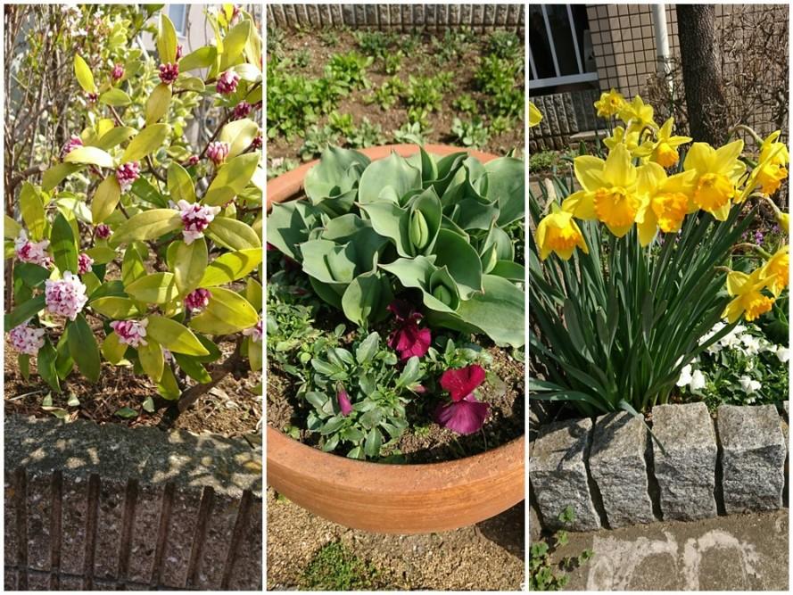 ぬくもりの園のお庭に春