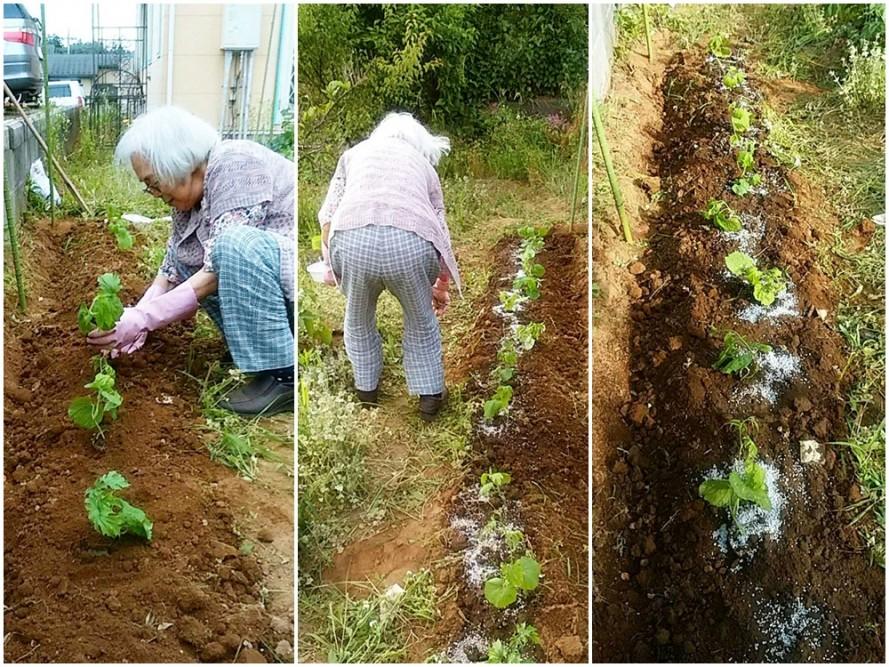 ぬくもりの畑にゴーヤ植えました