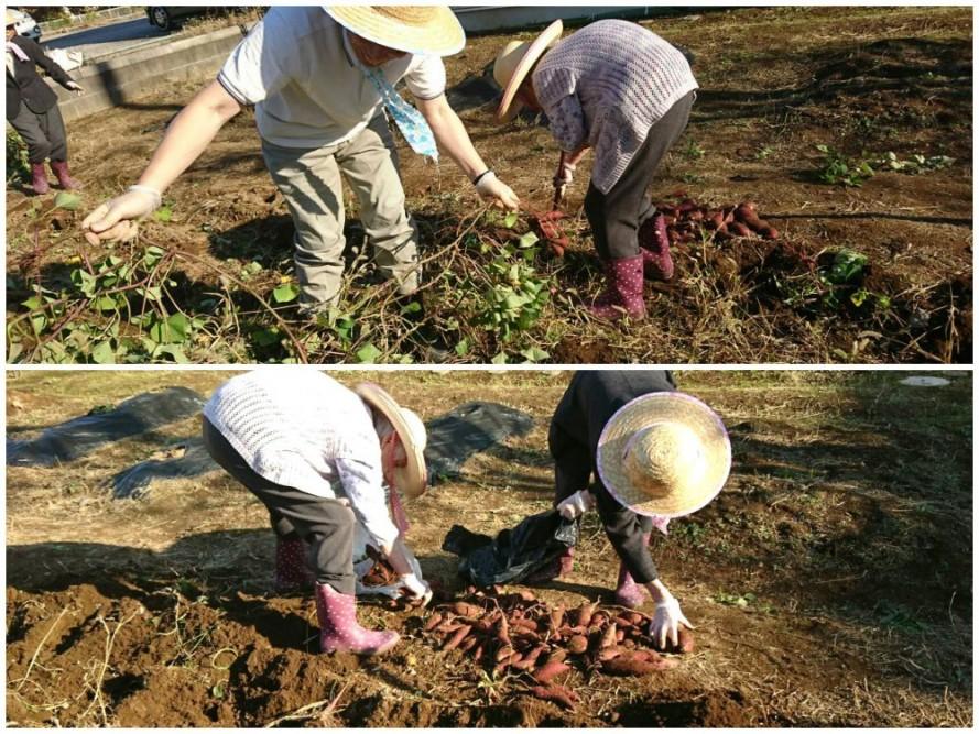 グループホームの芋掘り