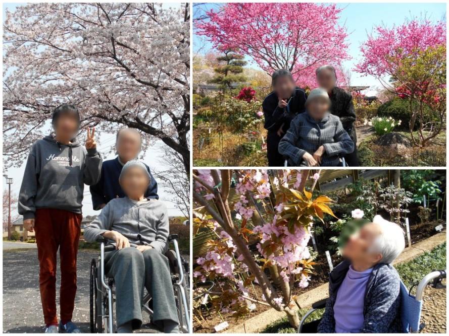 グループホームの桜巡り