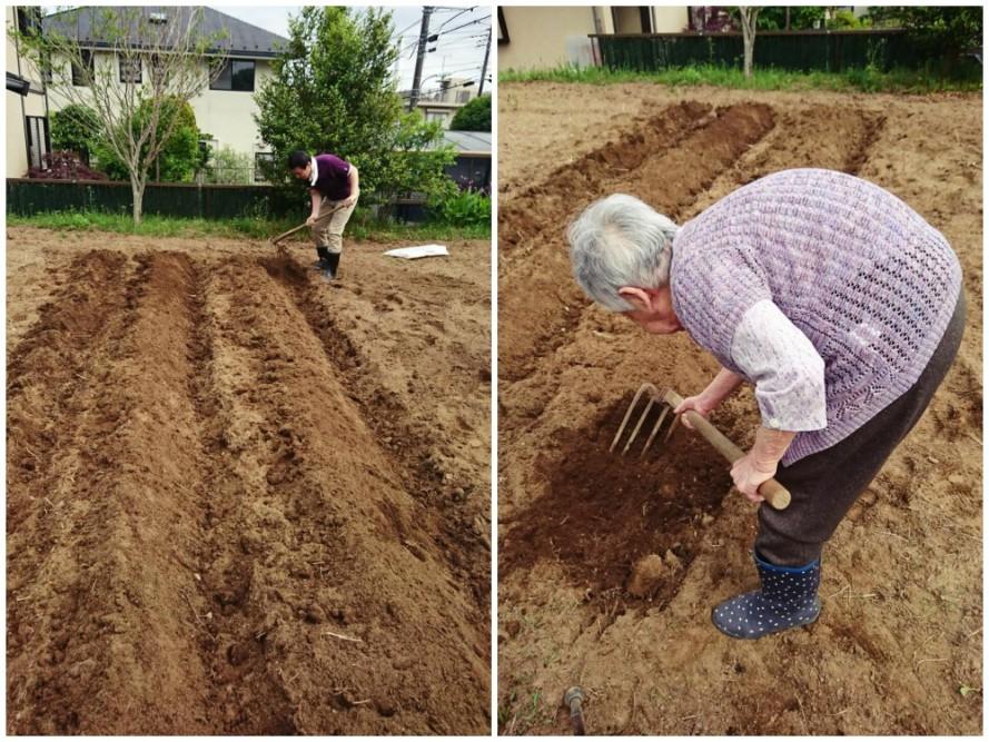 サツマイモの苗を植えました☺