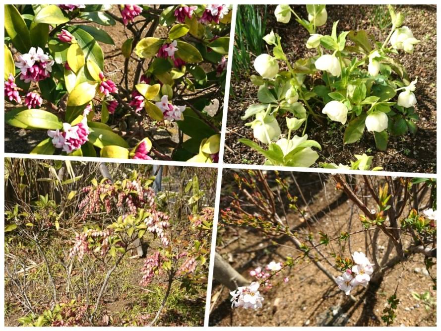 春の花が咲き始め