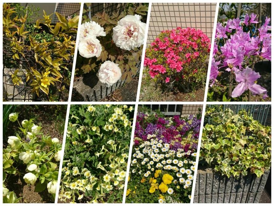 春の癒しのお花