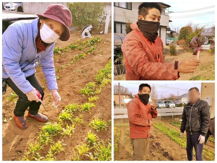 農家さんと野菜の収穫