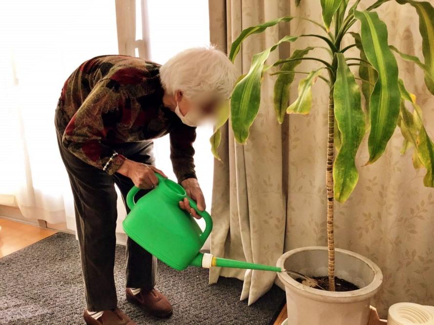 観葉植物に水やり