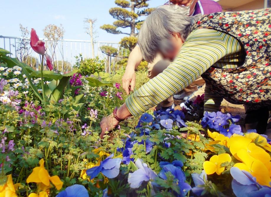 中庭の草むしり