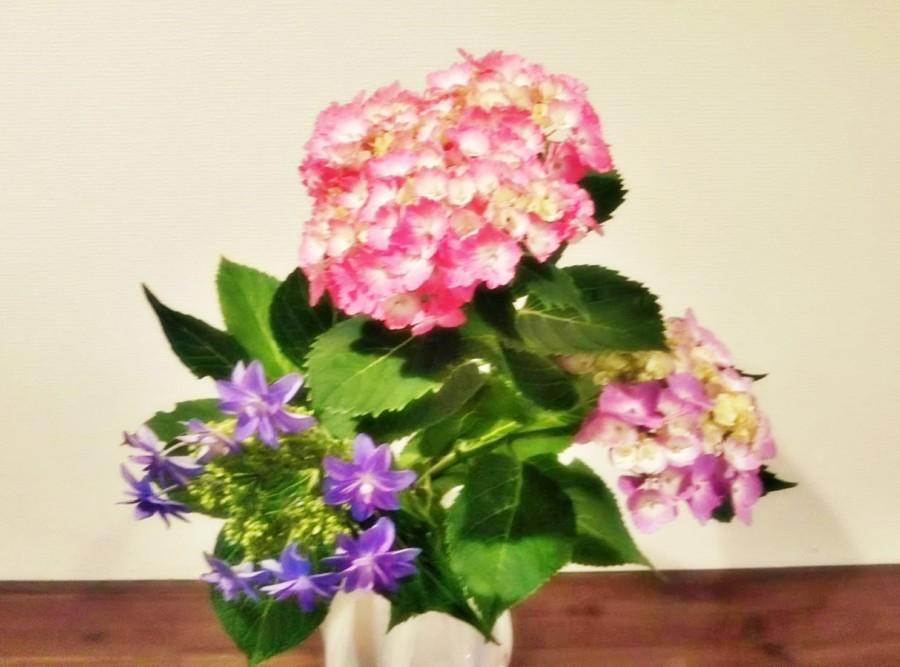 雨の多い季節に咲く紫陽花(アジサイ)を玄関に飾りました。