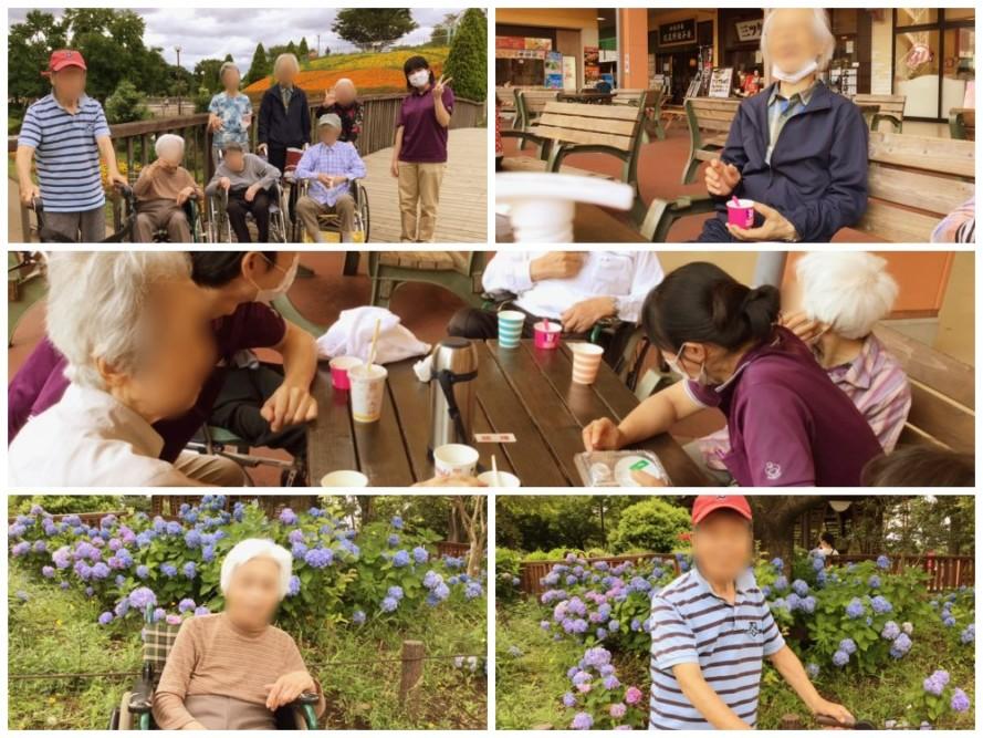6月のイベントで鹿沼公園へ紫陽花を見物をしに行きました。