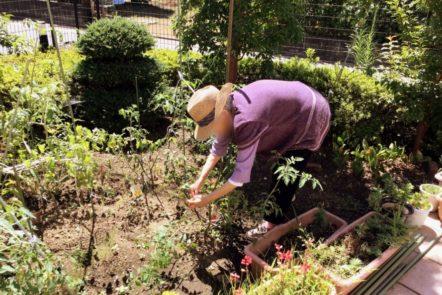 中庭で菜園